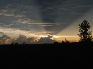 Awesome Florida sunset over Ocala National Forest.
