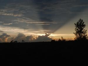 Awesome Florida sunset over Ocala National Forest.